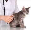 Ветеринарные клиники в Малмыже